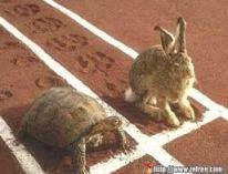 lièvre et tortue